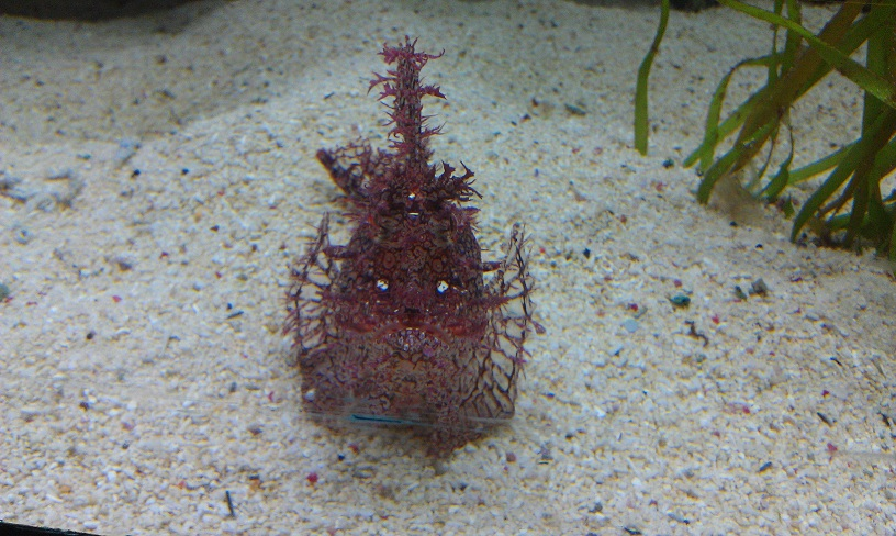 This was like the stonefish from earlier, but smaller and pink!