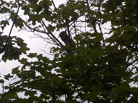 Squirrel eating leaves