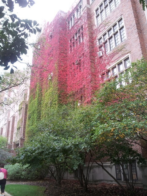UIC Medical School Fall Tree Blend